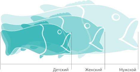 Рыбаход: здесь вы можете купить резиновые тапки, сланцы и шлепки рыбы рыбашаг
